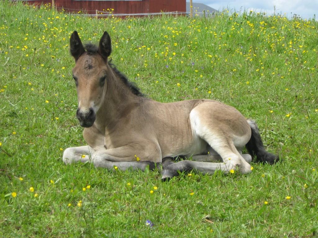 Hästarna är en viktig del av både min verksamhet och min fritid